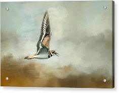 Flight Of The Killdeer Acrylic Print by Jai Johnson