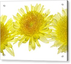 Floaters Acrylic Print by Rebecca Cozart