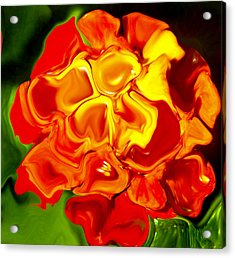 Flora Rebare Bella Acrylic Print by Robert OP Parrish