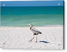Florida Sanibel Island Summer Vacation Beach Wildlife Acrylic Print by ELITE IMAGE photography By Chad McDermott