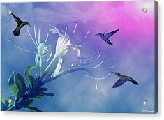 Flower  Acrylic Print by Evelyn Patrick