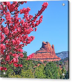 Flowering Tree - Sedona Red Rock Acrylic Print by Nikolyn McDonald