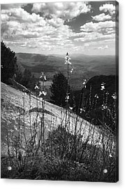 Flowers At The Top Of Table Rock Trail Acrylic Print by Kelly Hazel