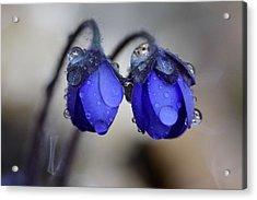 Flowers Fresh Rain Droplet Acrylic Print by Romeo Koitmae