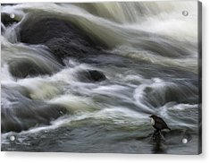 Flowing Contemplation Acrylic Print by Arne ?stlund