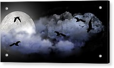Fly By Night Acrylic Print by Evelyn Patrick