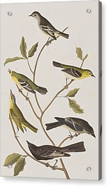 Fly Catchers Acrylic Print by John James Audubon