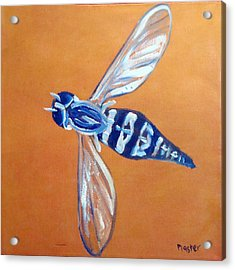 Fly West Acrylic Print by Scott Plaster