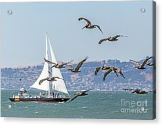 Flyby Acrylic Print by Kate Brown