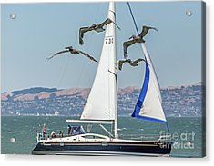 Flyby Two Acrylic Print by Kate Brown