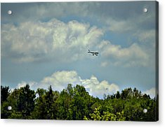 Flying Acrylic Print by Darlene Bell