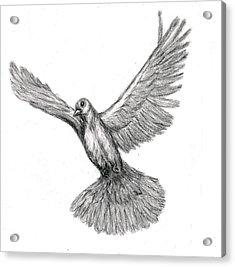 Flying Dove Acrylic Print by Joy Neasley