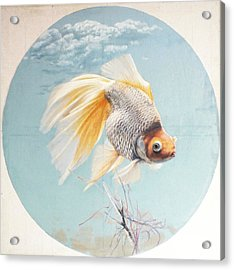 Flying In The Clouds Of Goldfish Acrylic Print by Chen Baoyi
