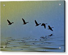 Flying Low Acrylic Print by Bill Cannon
