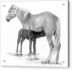 Foal And Mare In Pencil Acrylic Print by Joyce Geleynse