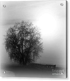 Fog Tree Acrylic Print by Barbara Henry