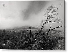 Foggy Grapevine Acrylic Print by Richard Leon