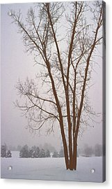Foggy Morning Landscape 13 Acrylic Print by Steve Ohlsen