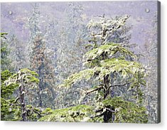 Foggy Tongass Rain Forest Acrylic Print by Eggers   Photography