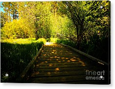 Follow The Path Acrylic Print by Cheryl Young