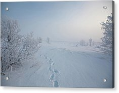Footprint In Snow Acrylic Print by Elin Enger