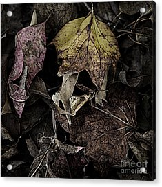 Forest Floor - Leaf 9 Acrylic Print by Pete Hellmann