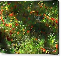 Forest Floor Light Acrylic Print by Terril Heilman