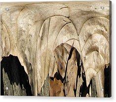 Forest Floor Acrylic Print by Tim Allen