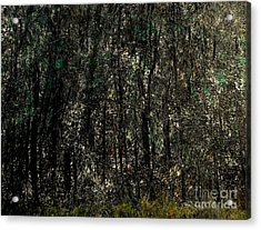 Forest For The Trees Acrylic Print by Rick Maxwell