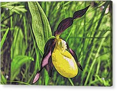 Forest Orchid Acrylic Print by Alexandre Ivanov