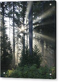 Forest Sunrise Acrylic Print by Crista Forest