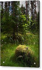Forest Tales Acrylic Print by Konstantin Dikovsky