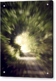 Forest Tunnel Acrylic Print by Wim Lanclus