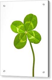 Four-leaf Clover Acrylic Print by David Nunuk