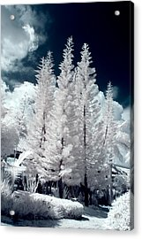 Four Tropical Pines Infrared Acrylic Print by Adam Romanowicz