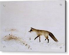 Fox In Snow Acrylic Print by Jane Neville