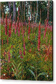 Foxgloves Acrylic Print by Georges Lacombe