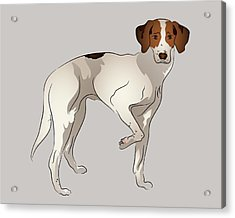 Foxhound Acrylic Print by MM Anderson