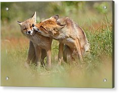 Foxy Love Series - But Mo-om II Acrylic Print by Roeselien Raimond