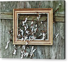 Framed Cotton Acrylic Print by Michael Thomas