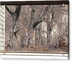 Framing Tangled Dunescape Acrylic Print by Ann Horn