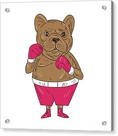 French Bulldog Boxer Boxing Stance Cartoon Acrylic Print by Aloysius Patrimonio