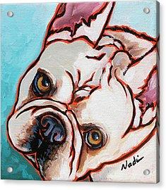 French Bulldog Acrylic Print by Nadi Spencer