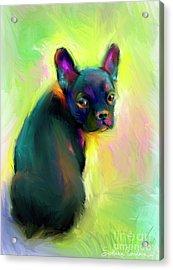 French Bulldog Painting 4 Acrylic Print by Svetlana Novikova