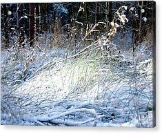 Frozen Grass Acrylic Print by Svetlana Sewell