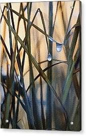 Frozen Raindrops Acrylic Print by Sharon Foster