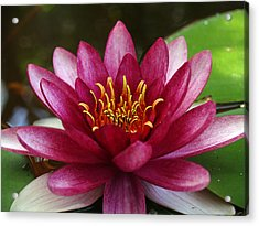 Full Lotus Acrylic Print by James Granberry