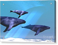 Full Of Light Acrylic Print by Corey Ford