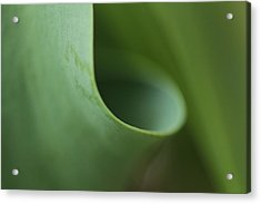 Funnel Vision Acrylic Print by Connie Handscomb