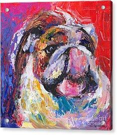 Funny Bulldog Licking His Hose Painting Acrylic Print by Svetlana Novikova